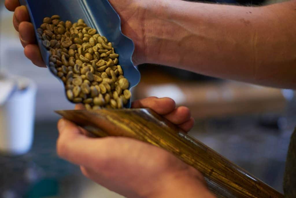 green beans at Cloudpicker roastery