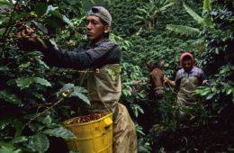 Barista & Farmer Colombia
